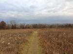 Ragdale prairie 2