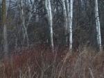 Ragdale prairie 3