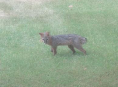 fox 2010