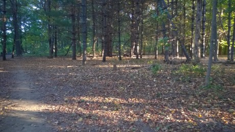 forest-walk-path